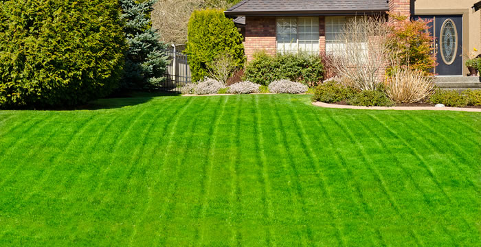 What You Need to Know About Landscaping Service Providers