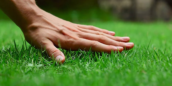 How to get professional and commercial landscaping services on online?